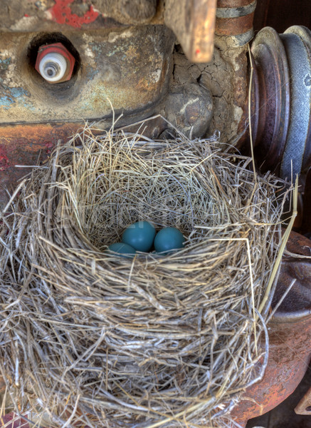 Robins nest in old tractor Stock photo © pictureguy