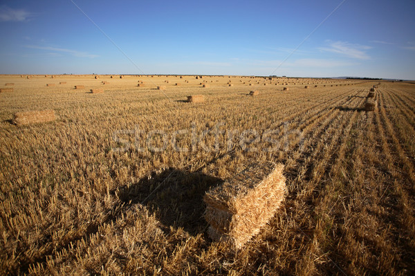 Straw bales in a Saskatchewan field Stock photo © pictureguy
