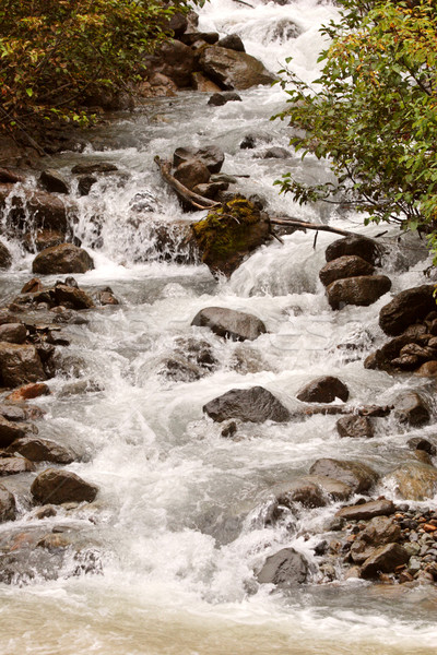 Swift flowing mountain stream in British Columbia Stock photo © pictureguy