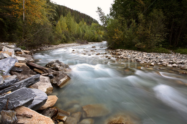 Water flow along Small Creek in beautiful British Columbia Stock photo © pictureguy