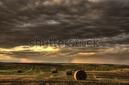 Wispy clouds over a Saskatchewan wheat field Stock photo © pictureguy