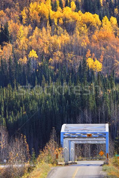 bridge and colorful trees during British Columbia autumn Stock photo © pictureguy
