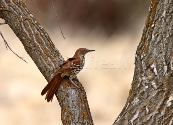 Bruin boomstam boom vogel kleur Stockfoto © pictureguy