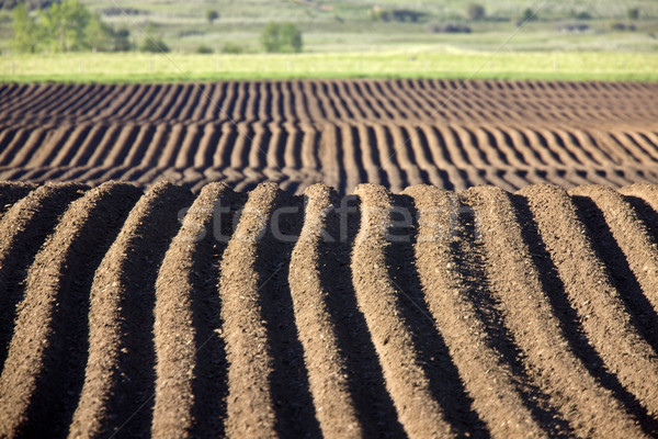 Farming Rows seeds plalnted Stock photo © pictureguy