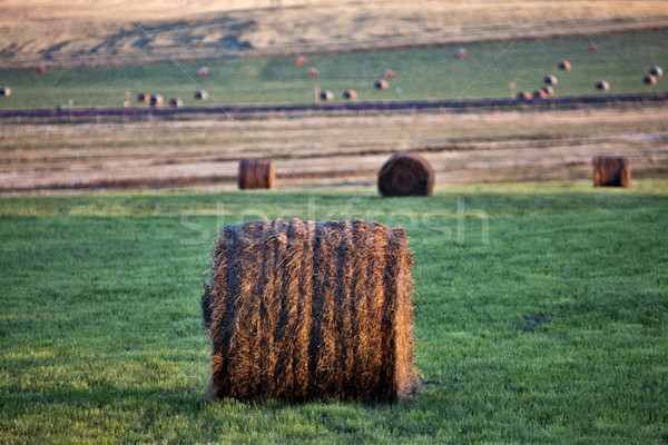 Hay Bales Saskatchewan Stock photo © pictureguy
