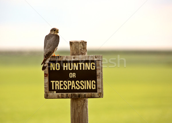 Kestrel on No Hunting sign in scenic Saskatchewan Stock photo © pictureguy