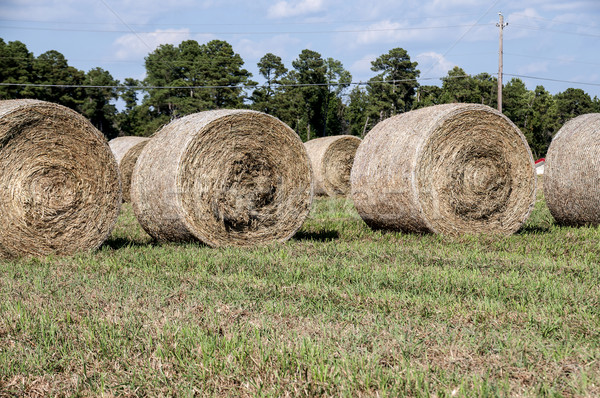Stockfoto: Hooi · veld · tarwe · gras · natuur · boerderij