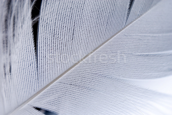 Veer vogels detail ondiep achtergrond Stockfoto © Pietus