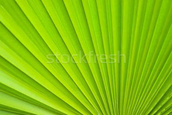 Stok fotoğraf: Palmiye · yaprağı · detay · doğa · yaprak · arka · plan · palmiye