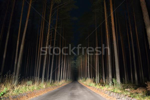 Raro carretera noche vista forestales coche Foto stock © Pietus