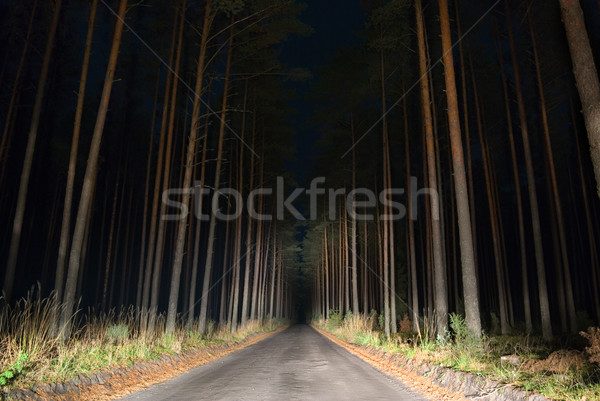 Weird weg nacht bos auto Stockfoto © Pietus