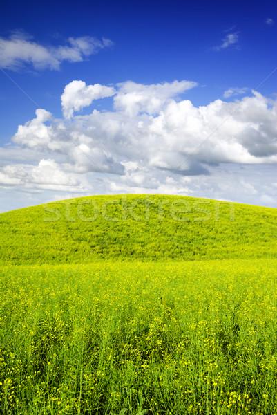 Verano paisaje vista pradera Europa Polonia Foto stock © Pietus