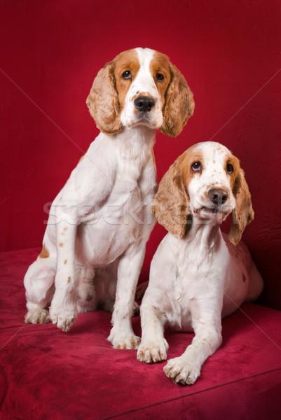 Nieuwsgierig grappig gezichten twee selectieve aandacht ogen Stockfoto © Pietus