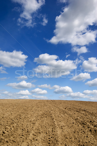 Veld blauwe hemel wolken hemel land horizon Stockfoto © Pietus