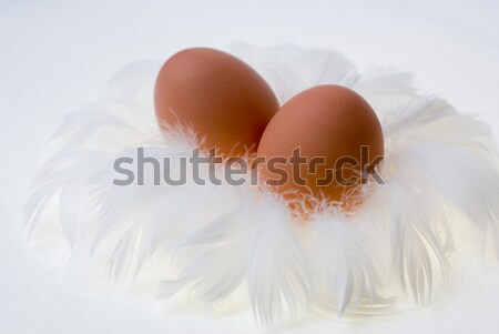 eggs in feather's nest Stock photo © Pietus
