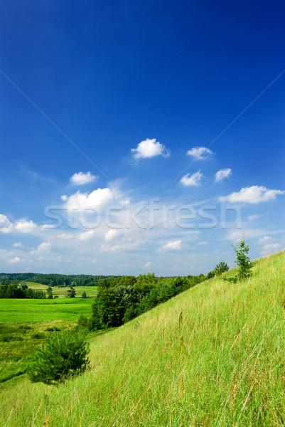 Zomer landschap voorjaar gras Stockfoto © Pietus