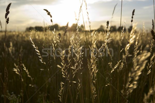 Prairie terres herbe soleil nature domaine Photo stock © Pietus