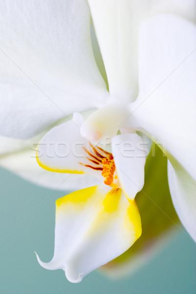 Stok fotoğraf: Detay · çiçek · orkide · seçici · odak · doğa · kafa