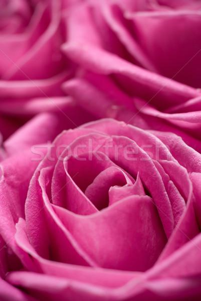 Rosa rosas atención selectiva flor fondo ramo Foto stock © Pietus