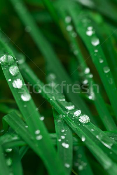 Gotas de agua gotas agua hierba superficial resumen Foto stock © Pietus