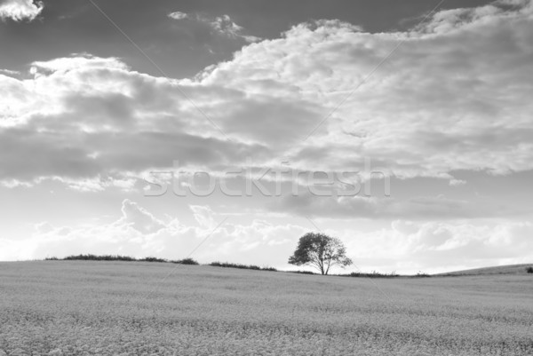Veld silhouet boom horizon landschap zomer Stockfoto © Pietus