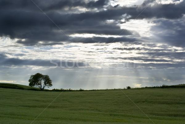 Alan siluet ağaç ufuk manzara yaz Stok fotoğraf © Pietus