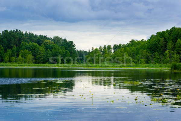 Lake and forest. Stock photo © Pietus