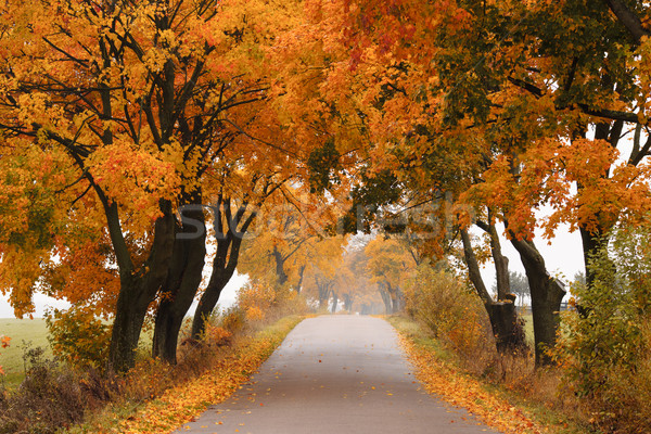Otono arce carretera colorido vibrante árboles Foto stock © Pietus