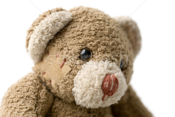 Portrait of Teddy Bear. Stock photo © Pietus