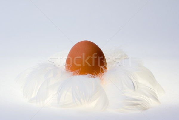 Stock photo: egg in feather's nest