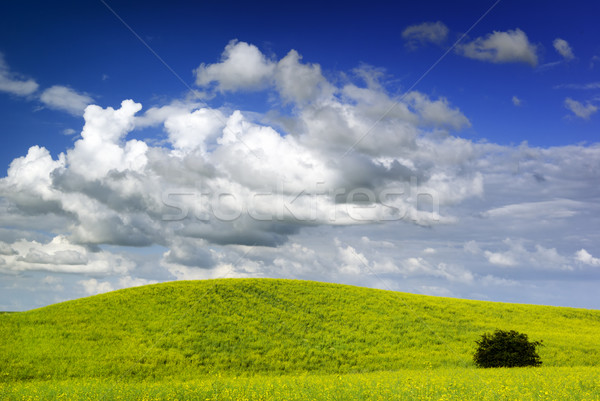 Zomer landschap Europa Polen Stockfoto © Pietus