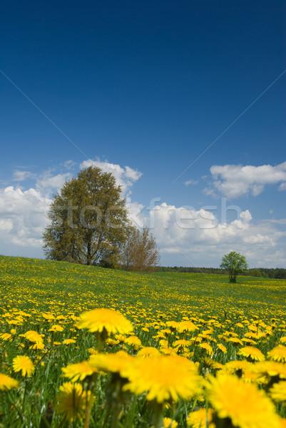 Voorjaar landschap paardebloemen velden bomen zonnige Stockfoto © Pietus