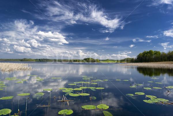 Meer water lelies hemel wolken Stockfoto © Pietus