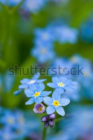 Grupo flores atención selectiva primavera verde Foto stock © Pietus