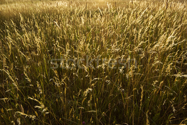 Prairie terres herbe nature domaine paille Photo stock © Pietus