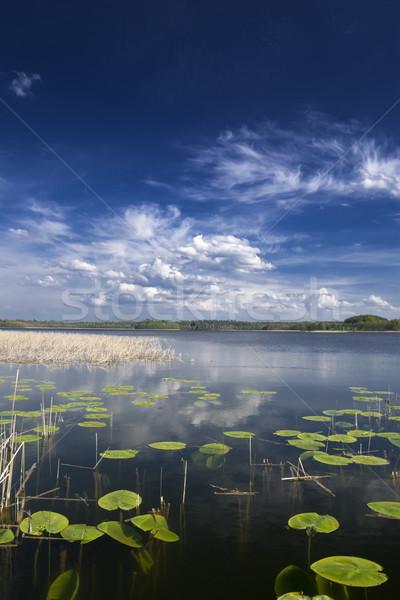 Lago vista agua lirios cielo nubes Foto stock © Pietus