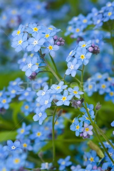 Takje wild bloemen natuur groene Blauw Stockfoto © Pietus