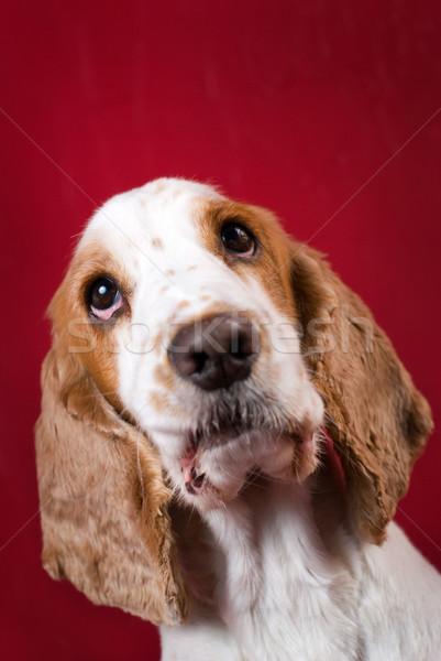 Cute Rood exemplaar ruimte hoofd Stockfoto © Pietus