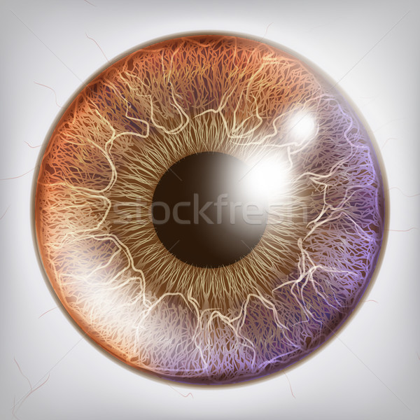 Eye Iris Realistic Vector. Anatomy Concept Illustration Stock photo © pikepicture