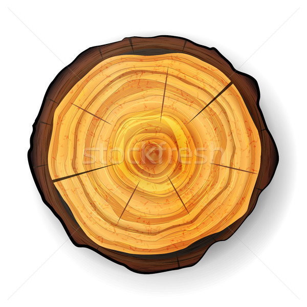 Cross Section Tree Wooden Stump Vector. Trunk Stump. Isolated Illustration. Stock photo © pikepicture