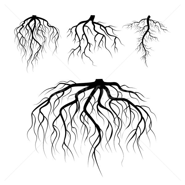 Tree Underground Roots Vector. Plant Underground Roots Set. Tree Root Black. illustration Of Plant S Stock photo © pikepicture