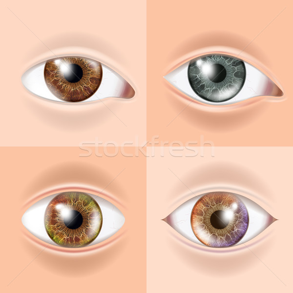 Human Eye Set Vector. Vision Concept. Medical Eye Diagnostic. Sight, Eyesight. Organ Test. Body Care Stock photo © pikepicture