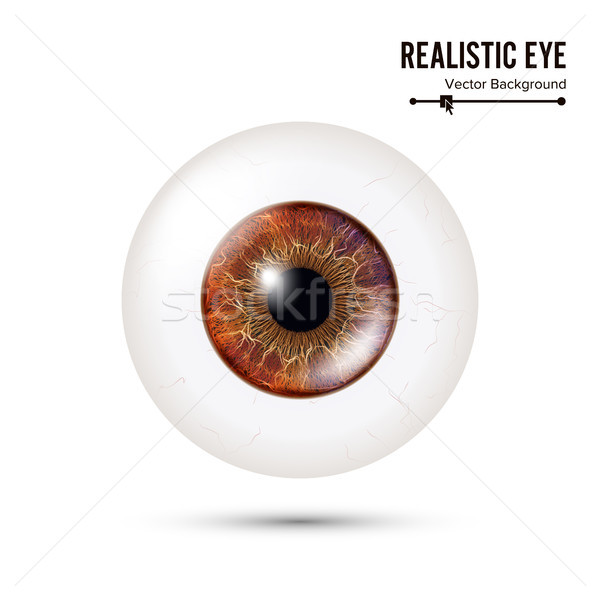 Realistic Detailed Human Eyeball. Vector Illustration Stock photo © pikepicture