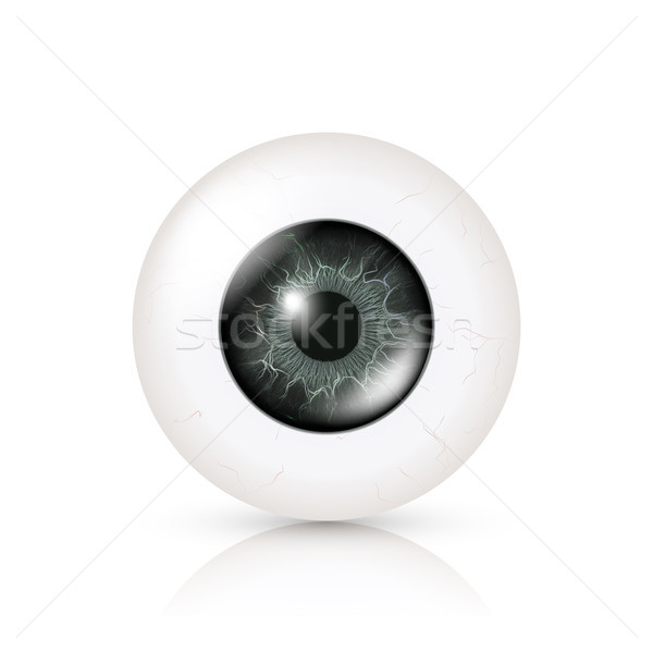 Eye Realistic. Vector Illustration Of 3d Human Glossy Photo Rrealistic Eye With Shadow And Reflectio Stock photo © pikepicture