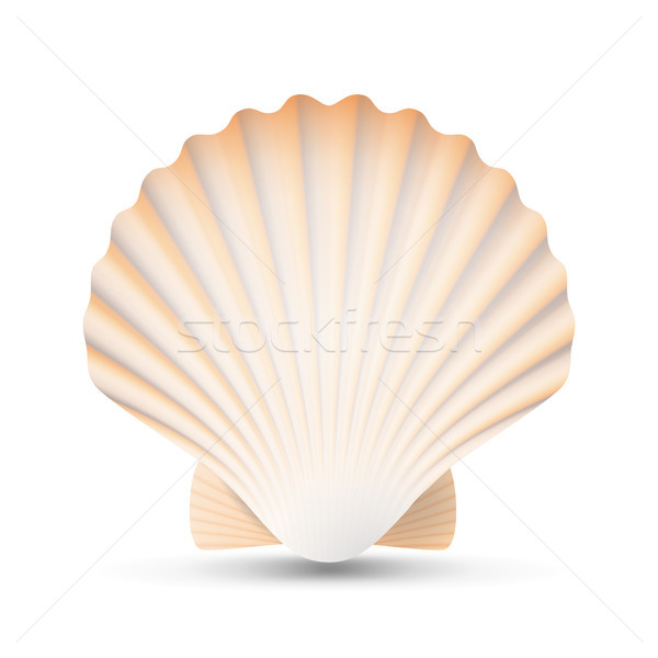 Scallop Seashell Vector. Beauty Exotic Souvenir Scallops Shell Isolated On White Background Illustra Stock photo © pikepicture