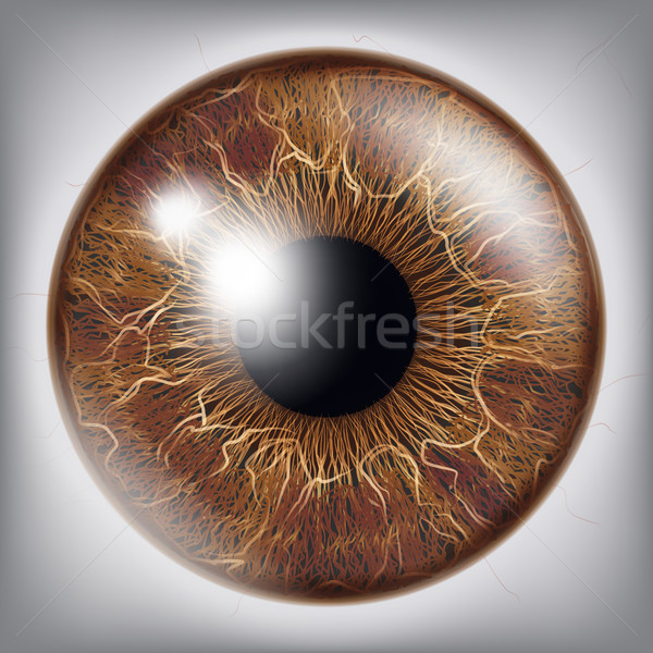 Human Eye Iris Vector. 3D Realistic Eyeball Illustration Stock photo © pikepicture