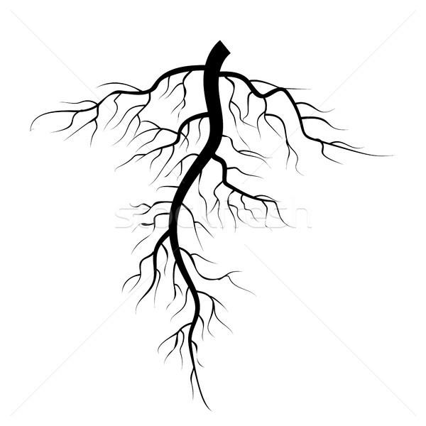 Boom ondergrondse wortels vector ingesteld illustratie Stockfoto © pikepicture
