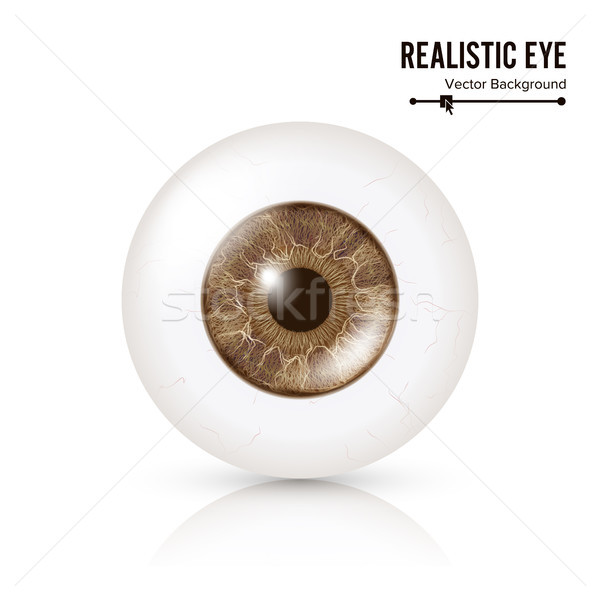Photo Realistic Eyeball. Human Retina. Vector Illustration Of 3d Human Glossy Eye With Shadow And Re Stock photo © pikepicture