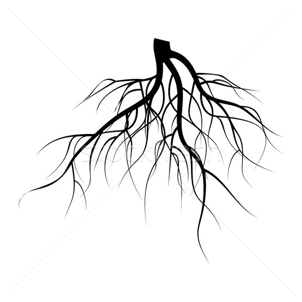 Stock photo: Tree Underground Roots Vector Set. Illustration Isolated On White Background