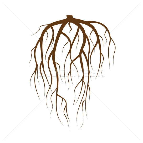Tree Underground Roots Vector. Brown Tree Root On White Background Flat Isolated Illustration Stock photo © pikepicture